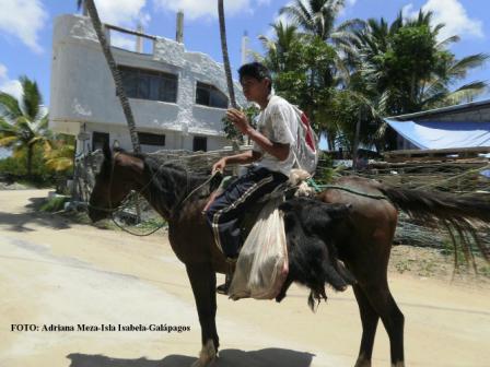 20110314183811-caceria-en-la-isla-isabela.jpg
