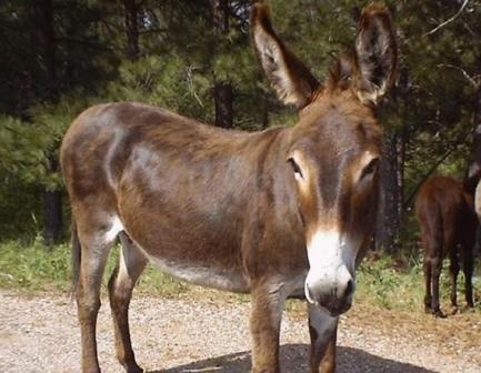 20121118023848-burro.jpg