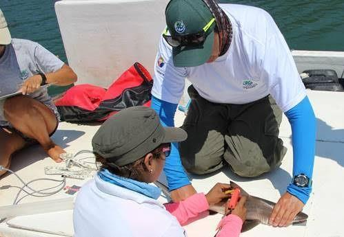 20160924021725-tiburones-en-galapagos.jpg