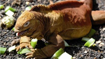 20110810010851-iguana.jpg